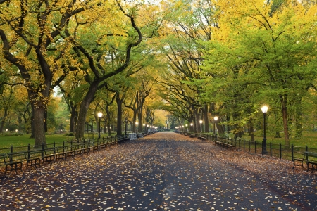 autumn in the city: Central Park  Image of  The Mall area in Central Park, New York City, USA at autumn