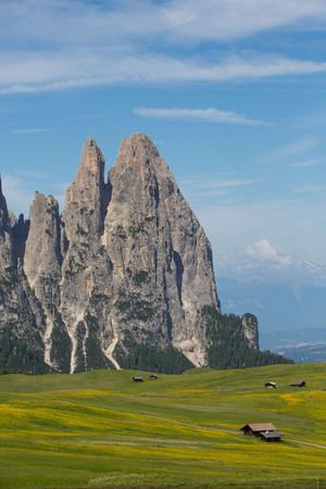 Early summer on the Alpe di Siusi in South Tyrol. In the picture the Sciliar mountain massif with the Santner peak