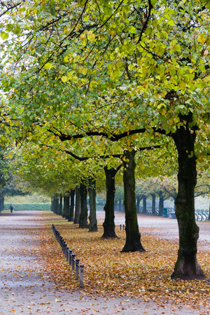 walking in Hofgarten Park in Munich on a autumn day, Germany in Europe Stockfoto