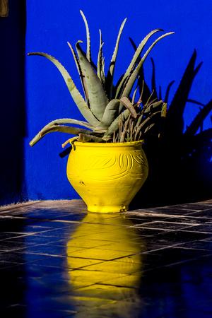 The beautiful Majorelle Garden is a botanical ,tropical garden and artist's landscape garden in Marrakech, Morocco. Le Jardin has a water fountain painted in Majorelle Blue. Stock Photo