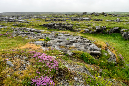 The Burren region, Clare, Ireland. The Burren measures 250 square kilometres and is enclosed roughly within the circle made by the villages of Ballyvaughan, Kilfenora and Lisdoonvarna. Фото со стока