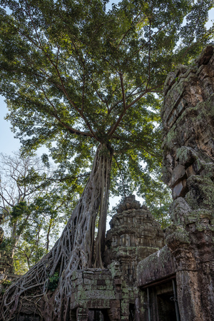 The ancient temple of Ta Prohm , Angkor , Cambodia 免版税图像