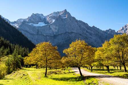 maple trees at Ahornboden, Karwendel mountains, Tyrol, Austria