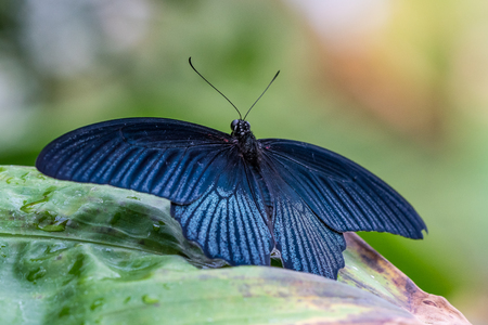 Tropical butterfly sitting on a leaf and resting. Reklamní fotografie - 121046023