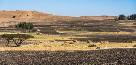 Landscape view on the road from Gondar to the Simien mountains, Noth Ethiopia, Africa. 版權商用圖片