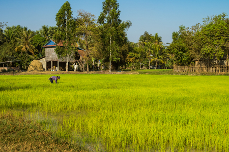 Beautiful Countryside view in tropical rural district, Siem Reap, Cambodia. A trip to the farms in the little villages outside Siem Reap