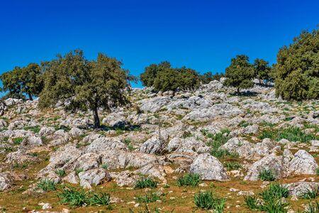 Landscape near Cuevas del Becerro in province Malaga, Andalusia, Spain