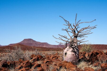 Vista del desierto en Twyfelfontein en Damaraland Namibia, África