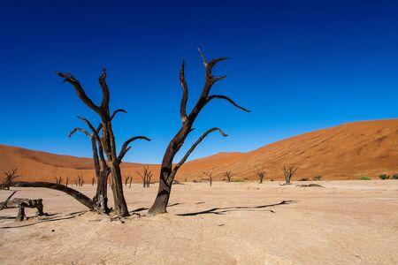Toneelmening bij Deadvlei, Sossusvlei. Namib-Naukluft National Park, Namibië, Afrika Stockfoto