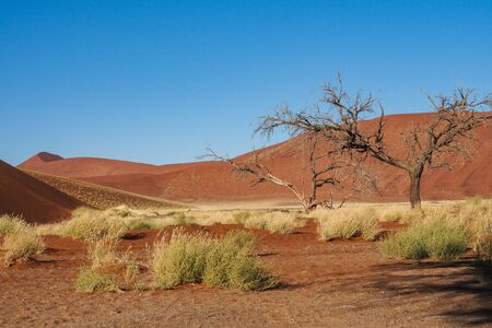 Amazing View of the dunes Sossusvlei. Namib Naukluft National Park. Sand dunes in the pan of Sossusvlei. Namibia. Africa. Banco de Imagens