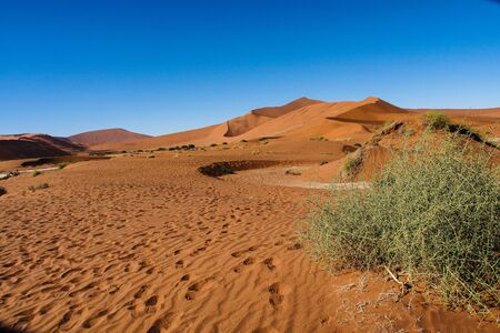 Scenic view at Deadvlei, Sossusvlei. Namib-Naukluft National Park, Namibia, Africa