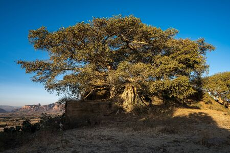 Landscape in Gheralta in Tigray, Northern Ethiopia, Africa