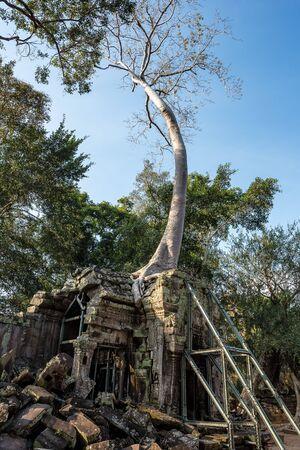 The ancient temple of Ta Prohm , Angkor , Cambodia Banco de Imagens