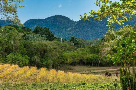 The Vinales valley in Cuba is a major tobacco growing area in Cuba