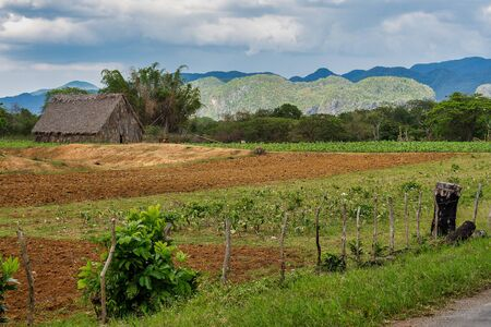 The Vinales valley in Cuba is a major tobacco growing area in Cuba