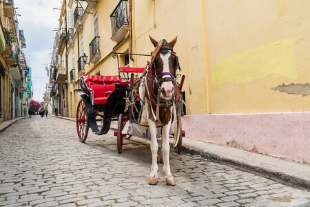 Donkey transportation in the streets of Havana in the tropical island Cuba. Stock Photo