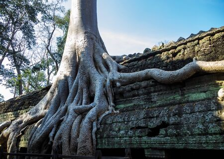 The ancient temple of Ta Prohm , Angkor , Cambodia 스톡 콘텐츠