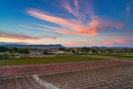 Peach blossom in Cieza La Torre in the Murcia region in Spain Stockfoto