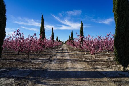 Peach blossom in Cieza, Orchards between Mirador El Horno and La Macetua. Photography of a blossoming of peach trees in Cieza in the Murcia region. Peach, plum and nectarine trees. Spain Stockfoto - 143218987