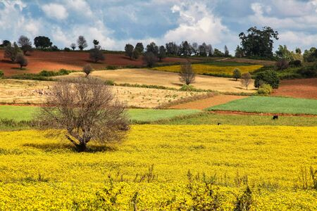 Fields in the central highlands of Myanmar show their beautiful colors, northwest of Inle Lake, near Pindaya