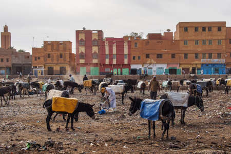 Rissani, Morocco - Oct 18, 2019: Rissani market in Morocco and the parking of donkeys and mules. Africa