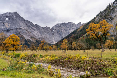 Autumn view of the maple trees at Ahornboden, Karwendel mountains, Tyrol, Austria