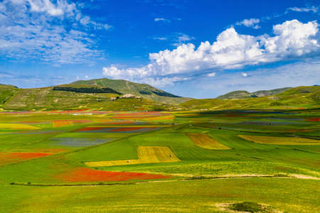 Lentil flowering with poppies and cornflowers in Castelluccio di Norcia, national park sibillini mountains, Italy, Europe Stockfoto