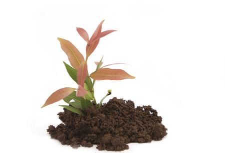 changing form: seedling