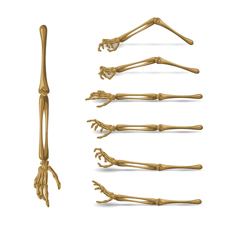 Bone hand set. Illustration