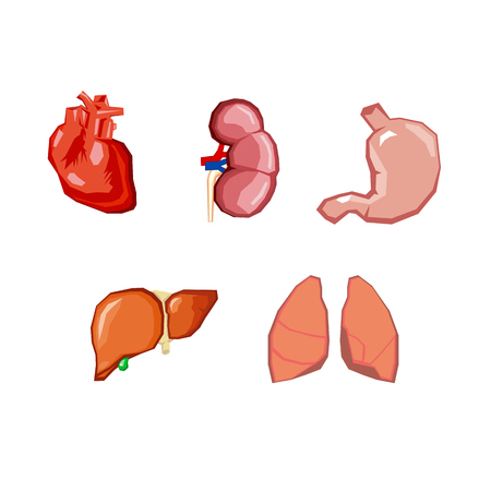 Human organs. Internal organs set. Human anatomy, internal parts of the body. Bodies of life. Set of vector elements - heart, Lecco, kidneys, liver, stomach Illustration