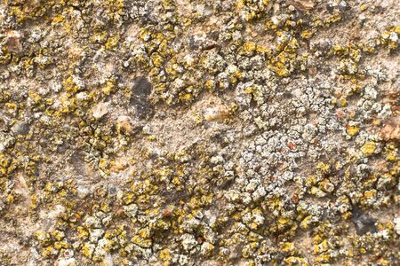 Detail of old concrete wall with colorful lichen