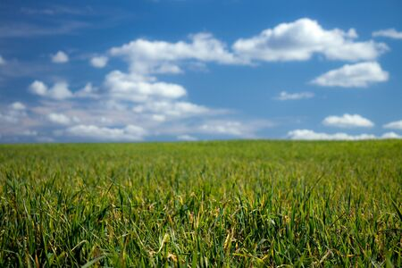 Green meadow and blues sky with white clouds in fifty fifty ratio in summer day