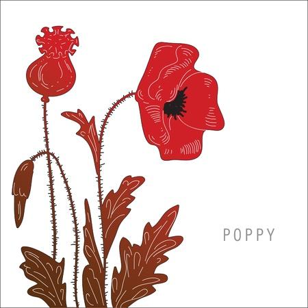 poppy seed: bush poppy painted on a white background