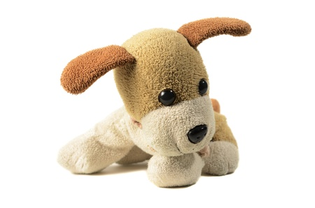 toy small dog on an isolated background Stock Photo