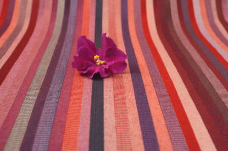 violet flower on a striped background fabric photo