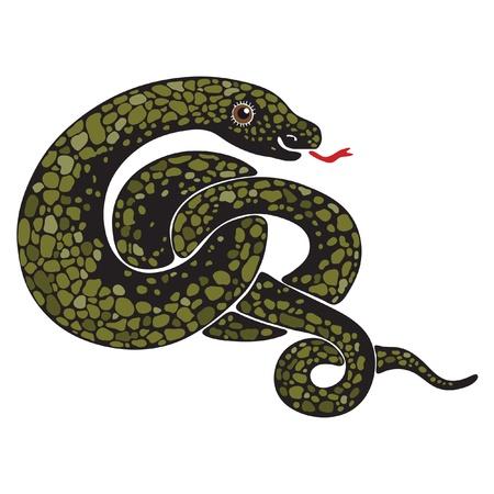greet eyes: Isolated image of a large snake curled
