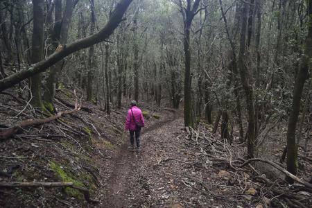 Rio Montesali wood, Pula