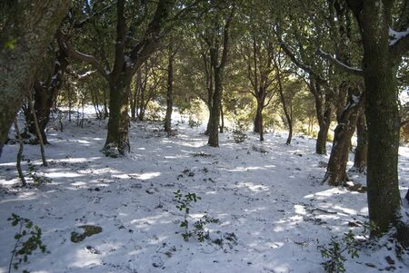 The snow in Musui wood