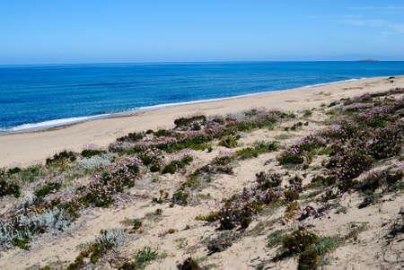 View of Poltu Biancu beach Stockfoto