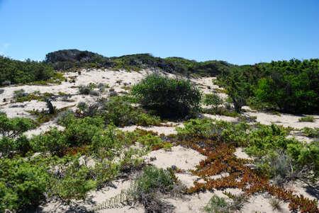View of Poltu Biancu dunes