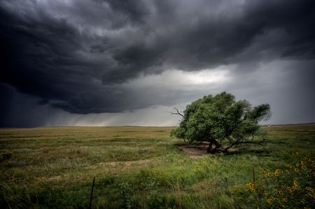 Strong winds batter a tree as a storm approaches photo