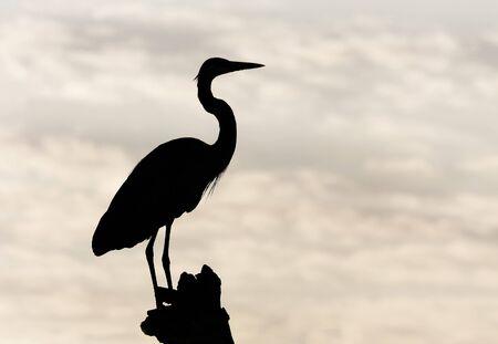 Heron Silhouette Stock Photo - 4466596