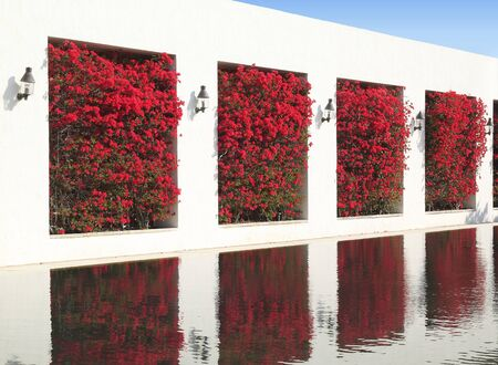 White wall with Bougainvillea trees reflecting in water