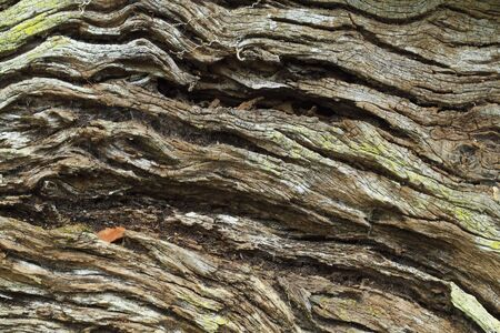 Closeup of a weathered wood tree bark  Stock Photo - 4543245