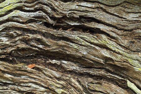 Closeup of a weathered wood tree bark Stock Photo - 4543245