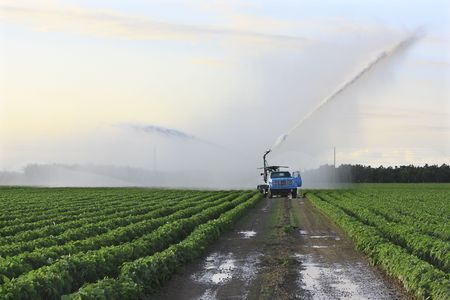 to ensure: Irrigation of farmland to ensure the quality of the crop Stock Photo