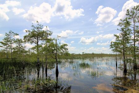 marsh plant: Florida Everglades Landscape 3 Stock Photo