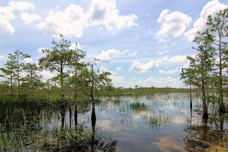 marsh plant: Florida Everglades Paesaggio 3 Archivio Fotografico