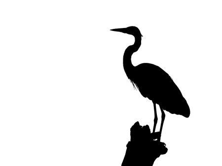 black beak: Heron Silhouette isolated  on white