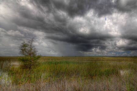 Beautiful scene of the Florida Everglades Landscape during a severe summer storm photo